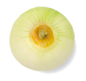 kyokuyo-onion-normal-02