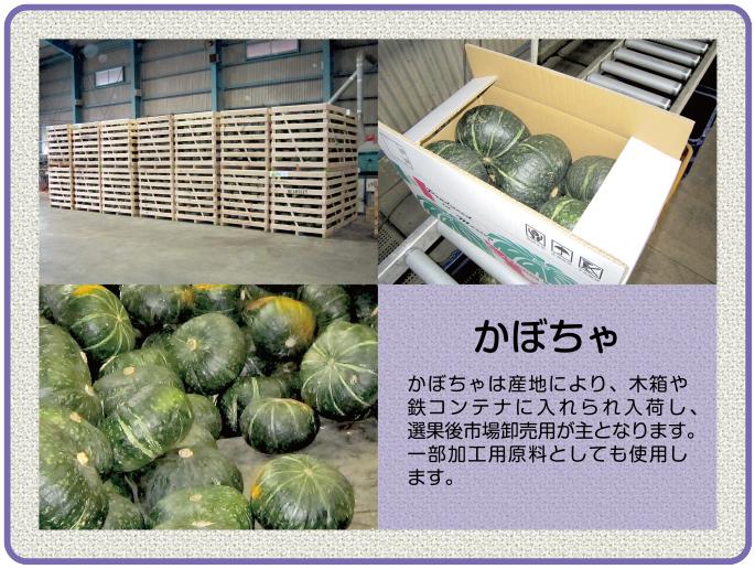 かぼちゃは産地により、木箱や鉄コンテナに入れられて入荷し、選果後市場卸が主となります。一部加工用原料としても使用します。