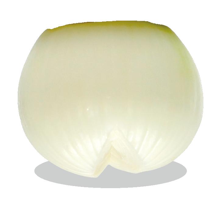 kyokuyo-onion-v-01